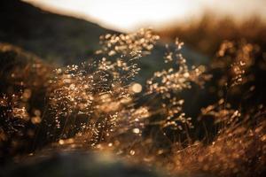 herbe des champs photo