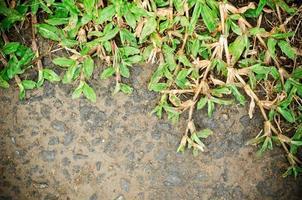 l'herbe verte photo