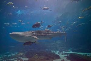 pays des merveilles sous-marin photo