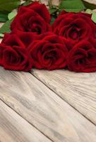 roses rouges fraîches photo
