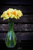 fleurs de narcisse photo