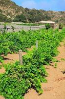 plantation, pantelleria photo
