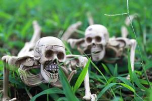 jouet squelette pour halloween photo