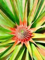 bébé ananas photo