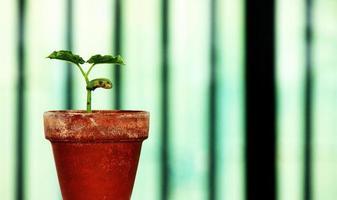 plante dans un vase photo