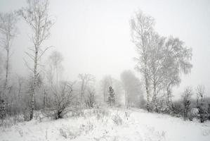 paysage brumeux d'hiver photo