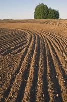 paysage de champ de ferme cultivée photo