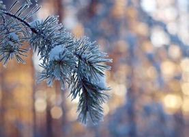 paysage d'hiver. scène d'hiver