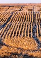 paysage de prairie en hiver