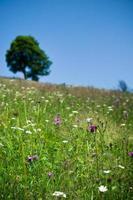 paysage de printemps en montagne. photo