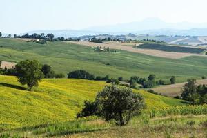 marches (italie): paysage d'été