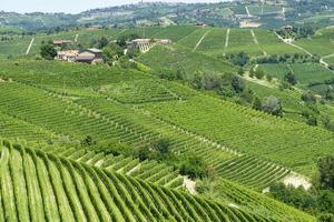 paysage d'été à langhe (italie) photo