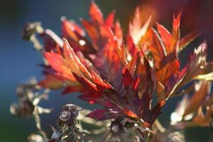 mûre d'automne photo