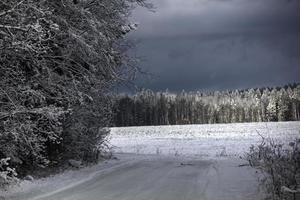 route d'hiver. bois. photo