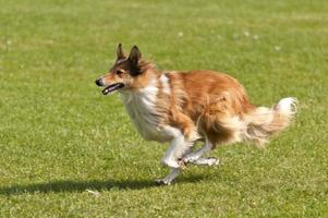 course de chiens photo