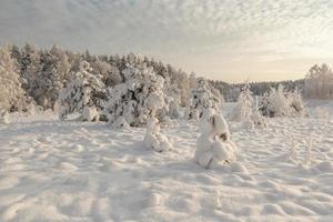 clairière d'hiver en bois. photo