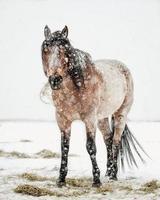 cheval dans les chutes de neige d'hiver
