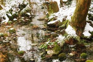 ruisseau dans la forêt d'hiver