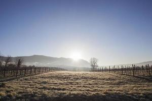 cour à vin en hiver
