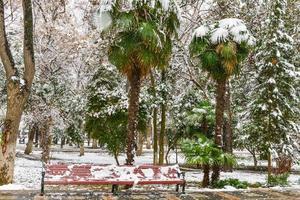 arbres dans le parc d'hiver