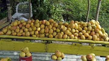 marché aux fruits photo