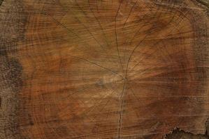 coupe transversale de chêne photo