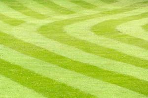pelouse rayée