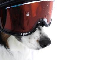 xtreme ski doggy photo