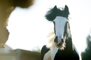 cheval bricoleur en cours d'exécution photo