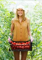 riche récolte de tomates photo