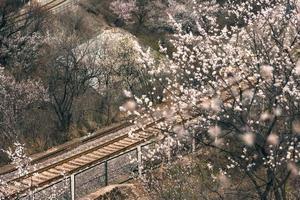 dans le chemin de fer de montagne photo