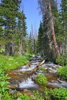 ruisseau de montagne dans le désert du Colorado pendant l'été