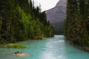 randonnée berg lake trail