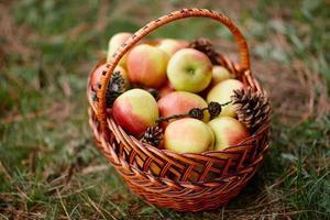panier en osier aux pommes sur une herbe verte photo