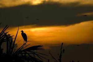 coucher de soleil oiseau sauvage photo