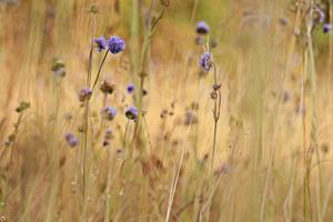 coucher de soleil automne fleurs sauvages