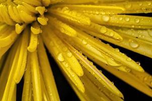 cremon jaune