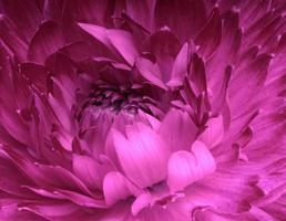 fleur abstraite photo