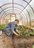 plants de tomates dans les serres au sol photo