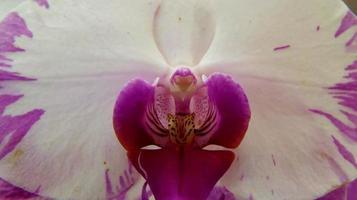 orchidée bouchent