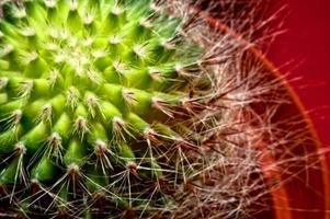 cactus - gros plan photo