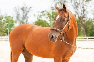 cheval bouchent photo