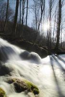 beau ruisseau dans la forêt photo