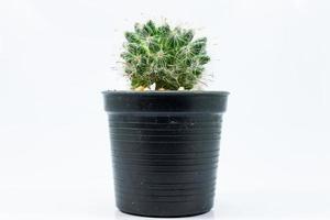 gros plan de cactus photo