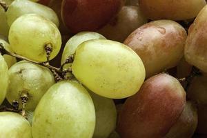 raisin bouchent photo