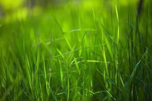 herbe de printemps fraîche photo