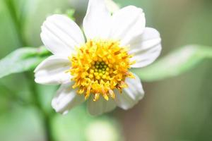 fleur sur fond de jardin flou
