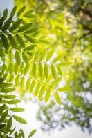 brouiller les feuilles vertes et les branches avec fond de bokeh naturel photo