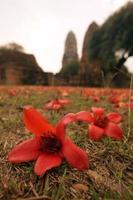 thaïlande ayutthaya wat ratburana photo