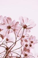 fleurs de cosmos vintage